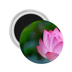 Pink Flowers 2 25  Magnet