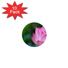 Pink Flowers 1  Mini Button (10 Pack)