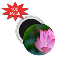 Pink Flowers 1.75  Magnet (100 pack)