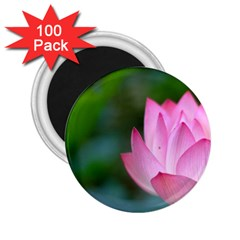 Pink Flowers 2.25  Magnet (100 pack)