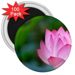 Pink Flowers 3  Magnet (100 pack)