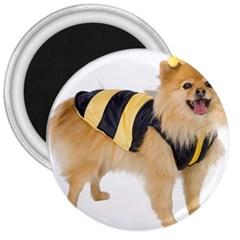 Dog Photo 3  Magnet