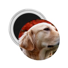 Dog Photo Cute 2 25  Magnet