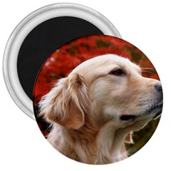 dog-photo cute 3  Magnet