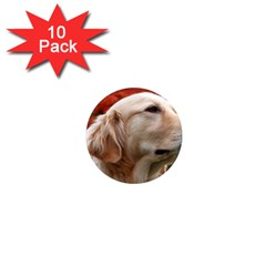 dog-photo cute 1  Mini Magnet (10 pack)