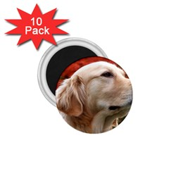 dog-photo cute 1.75  Magnet (10 pack)