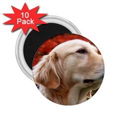 Dog Photo Cute 2 25  Magnet (10 Pack)