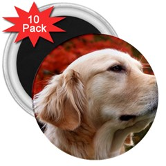 Dog Photo Cute 3  Magnet (10 Pack)