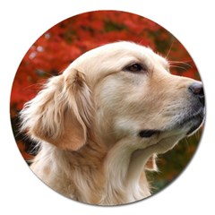 dog-photo cute Magnet 5  (Round)