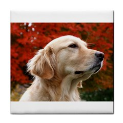 Dog Photo Cute Face Towel