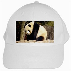 Giant Panda National Zoo White Cap