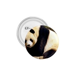 Giant Panda National Zoo 1.75  Button