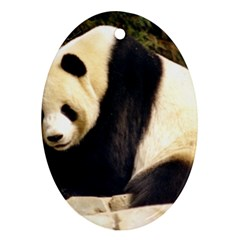 Giant Panda National Zoo Ornament (oval)