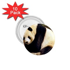 Giant Panda National Zoo 1 75  Button (10 Pack)