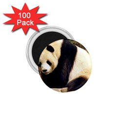 Giant Panda National Zoo 1 75  Magnet (100 Pack)