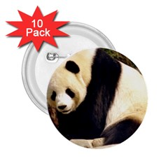Giant Panda National Zoo 2 25  Button (10 Pack)