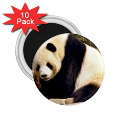 Giant Panda National Zoo 2 25  Magnet (10 Pack)