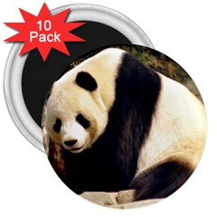 Giant Panda National Zoo 3  Magnet (10 Pack)