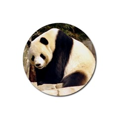Giant Panda National Zoo Rubber Round Coaster (4 Pack)