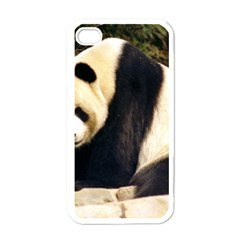 Giant Panda National Zoo Apple Iphone 4 Case (white)