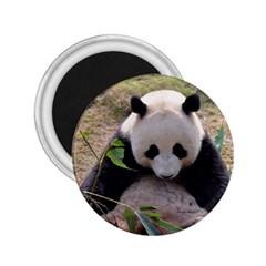 Big Panda 2 25  Magnet