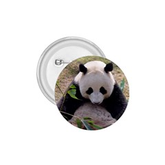Big Panda 1.75  Button