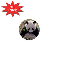 Big Panda 1  Mini Magnet (10 Pack)