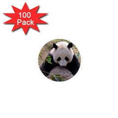 Big Panda 1  Mini Magnet (100 pack)