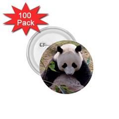 Big Panda 1 75  Button (100 Pack)
