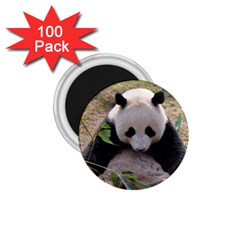 Big Panda 1 75  Magnet (100 Pack)