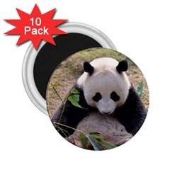 Big Panda 2 25  Magnet (10 Pack)