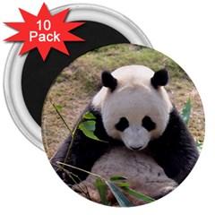 Big Panda 3  Magnet (10 Pack)