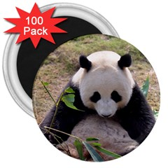 Big Panda 3  Magnet (100 Pack)