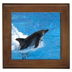Swimming Dolphin Framed Tile