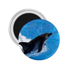 Swimming Dolphin 2 25  Magnet