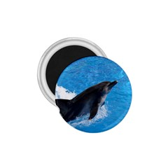 Swimming Dolphin 1.75  Magnet