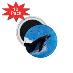Swimming Dolphin 1 75  Magnet (10 Pack)