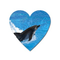 Swimming Dolphin Magnet (Heart)