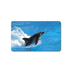 Swimming Dolphin Magnet (name Card)