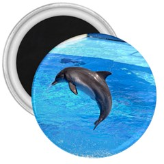 Jumping Dolphin 3  Magnet