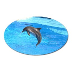 Jumping Dolphin Magnet (Oval)