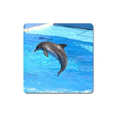 Jumping Dolphin Magnet (Square)
