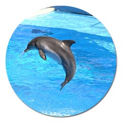 Jumping Dolphin Magnet 5  (Round)