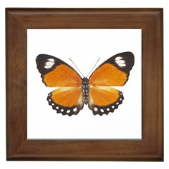 Butterfly Insect Framed Ceramic Tile