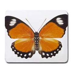 Butterfly Insect Large Mouse Pad (Rectangle)