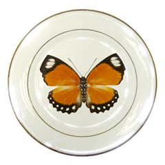 Butterfly Insect Porcelain Display Plate