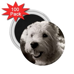Westie.puppy 100 Pack Regular Magnet (Round)