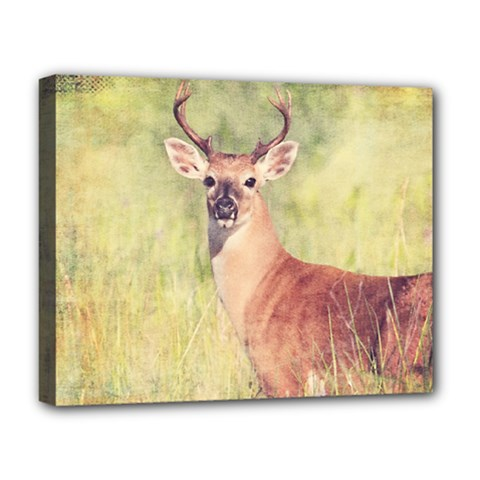 Buck Deluxe Canvas 20  X 16  (stretched) by heathergreen