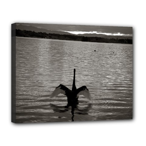 Swan, Canberra 11  X 14  Framed Canvas Print