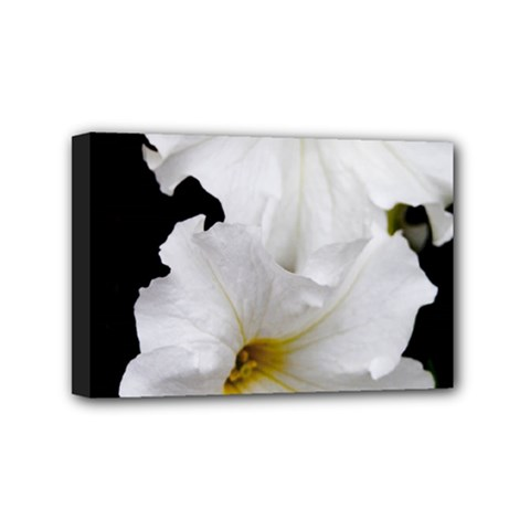 White Peonies   4  X 6  Framed Canvas Print by Elanga